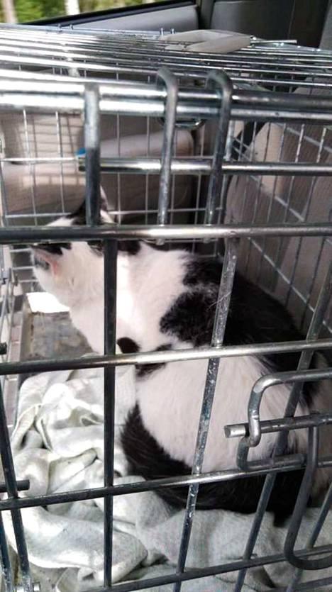 Kissa löytyi vuokra-asunnosta hylättynä.