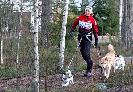 Riikka Tiisanoja ja jackrussellinterrierit Friidu ja Doris sekä monirotuinen Maisy lenkillä.