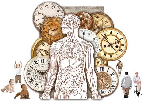 Paino ei nouse vääjäämättä 30-40 vuoden iässä – Tiede kumosi sitkeän harhakäsityksen