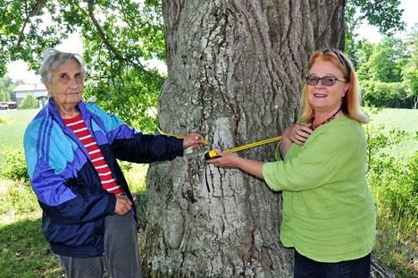 -Neljä ja puoli metriä, toteavat Sirpa Tammelin (vas.) ja Anne Pentti mitatessaan Merimaskun maamiesseurantalon vieressä kasvavan vanhan tammen ympärystä.
