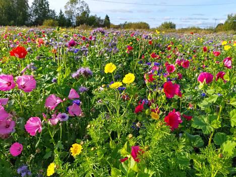 Sastamalan kukkapellot ovat osa Tampereen ja Pirkanmaan kulttuuripääkaupunkiohjelmaa.
