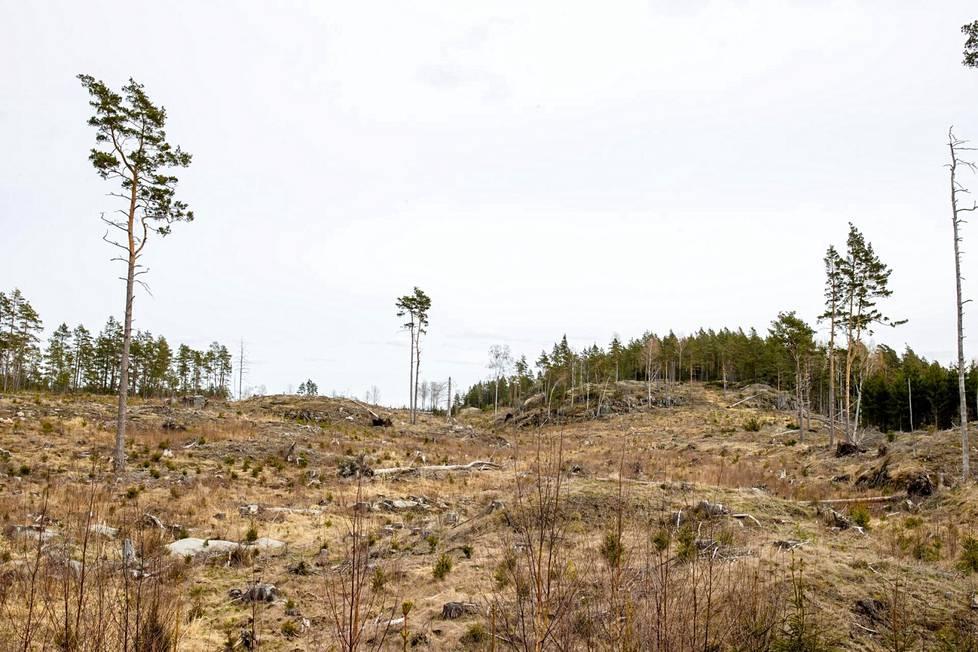 Konstsamfundetin omistama PEFC-sertifioitu metsä Kemiönsaarellä hakattiin viitisen vuotta sitten. Hakkuualue 3. toukokuuta 2021.