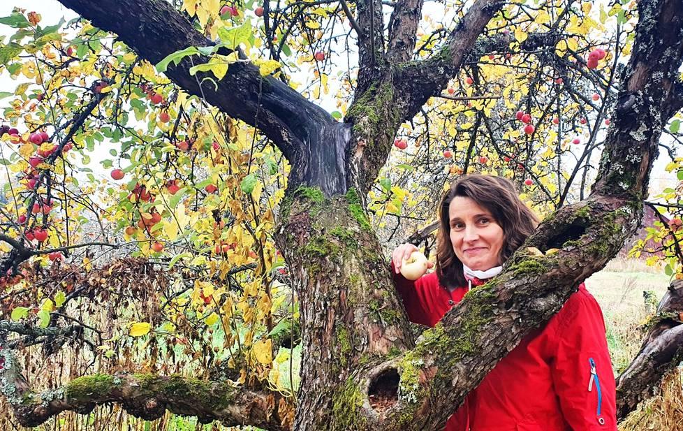 Helmisen tilalle Korvolaan on istutettu 1930-luvulla parisataa omenapuuta. Talossa kolmisen vuotta asunut Elina Lehtonen arvostaa isänisänsä työtä ja on opiskellut netistä tietoa eri omenalajikkeista.