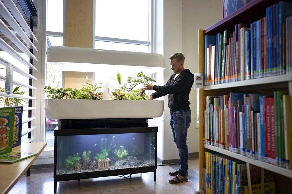 Juha Laitinen laittoi Ulvilan kirjaston InnaGrow-sisäpuutarhaa kuntoon torstaina.