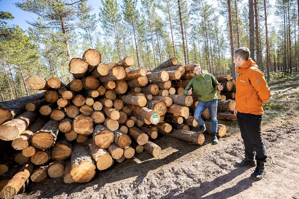 Puunkorjuu tapahtuu 1–3 vuoden sisällä puukaupan solmimisesta. Kunnon talvipakkasia vaativissa kohteissa voidaan sopia pidemmästä määräajasta. Metsäasiantuntijat Jussi Reko ja Konsta Koskinen tekevät jo kauppoja uudelle Rauman sahalle toimitettavista mäntytukeista.